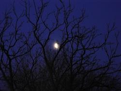 midnight moonscape