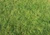 grass #5