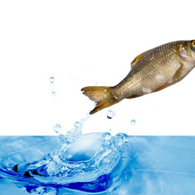 Der Fisch im Netz