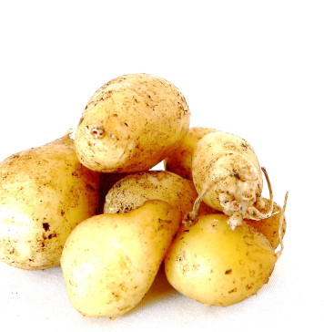 Organic home-grown potatoes