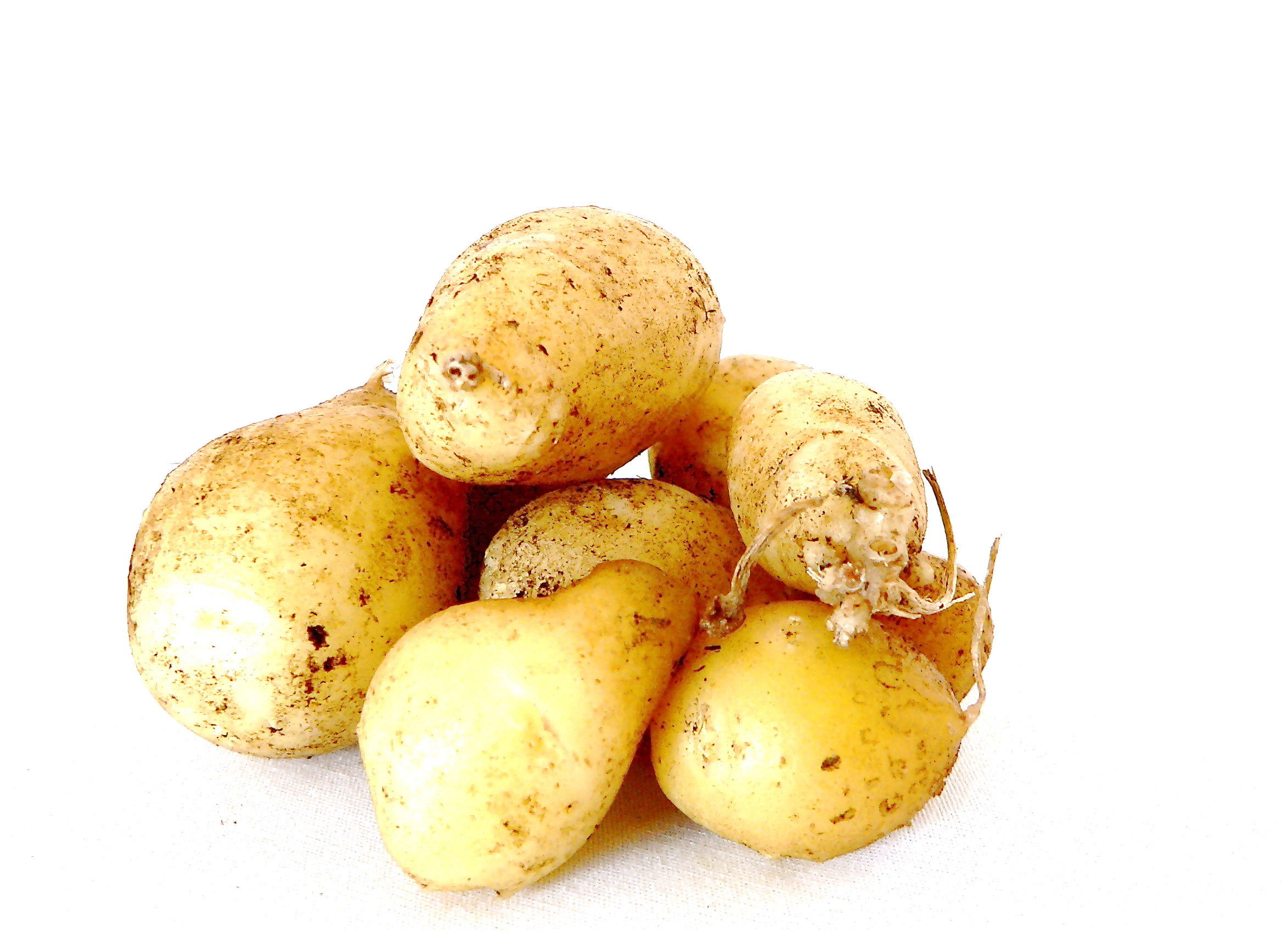 kartoffelfechten › jugendleiterblog