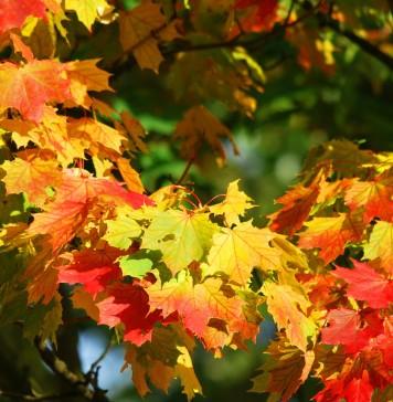 autumn-209479_1280