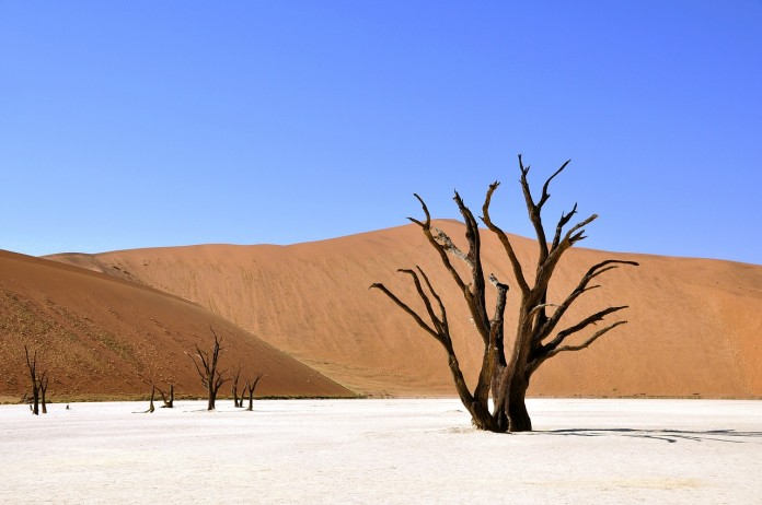 tree-64310_1280