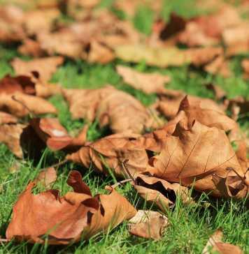 autumn-473059_1280