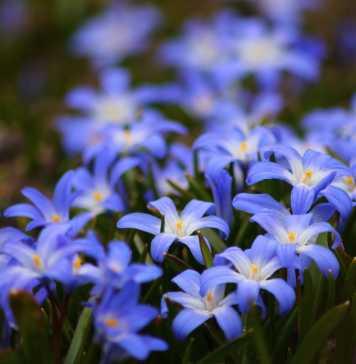 flowers-722095_1280
