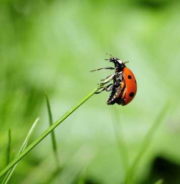 ladybug-796482_1280