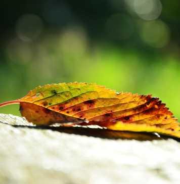 leaf-941589_1280
