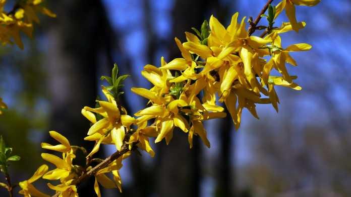 spring-105633_1280