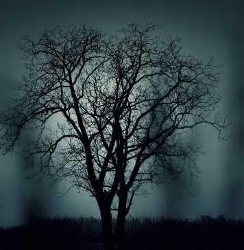 tree-407256_1280