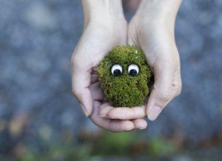 hands-creative-grass-moss