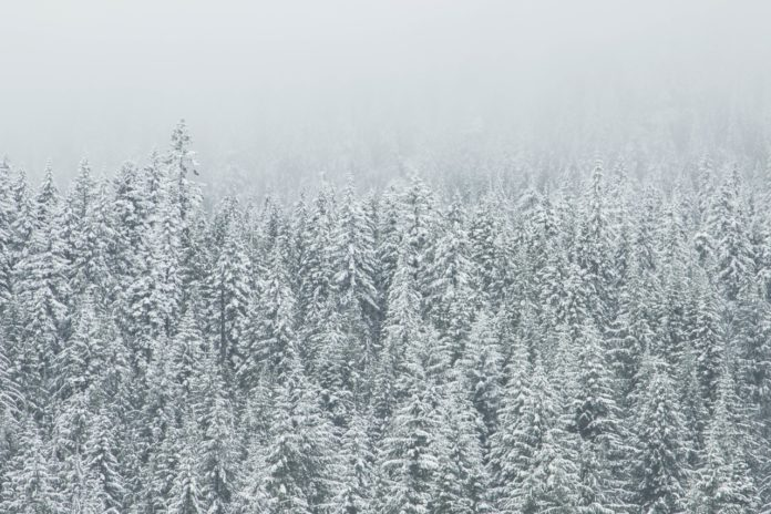 snow-forest-trees-winter