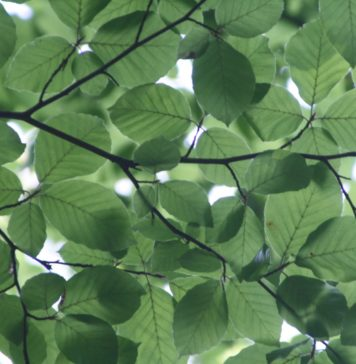 Natur-Bild