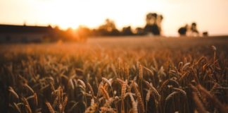 food-sunset-love-field
