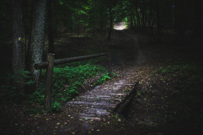 wood-nature-dark-forest