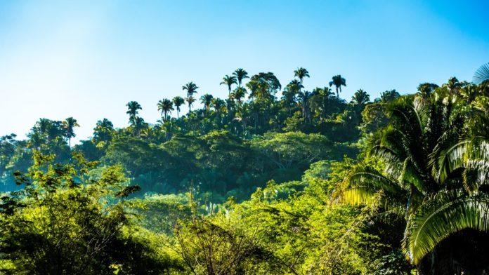 Gruppenstunden-Idee: Dschungel