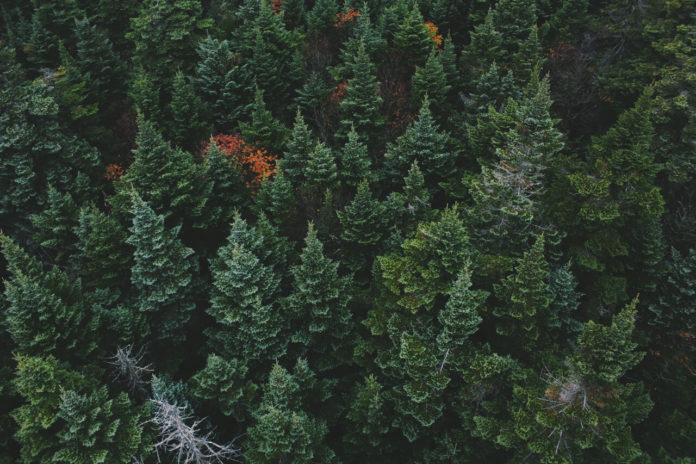 Ferienlager-Motto: Wald
