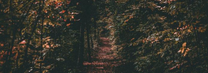 Ausmalbild für Kinder: Herbst