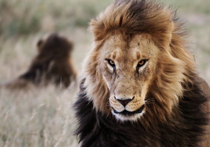 Gruppenstunden-Idee: Safari