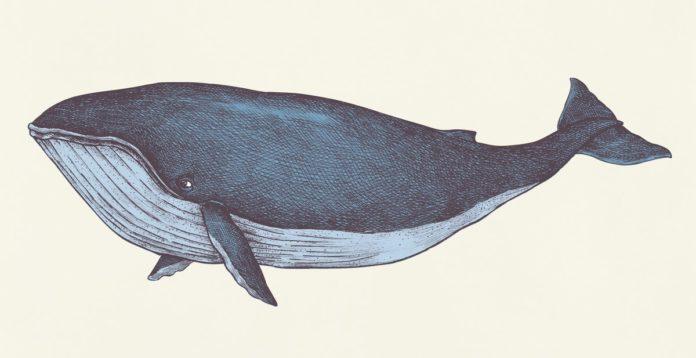 Ideen für den Kindergottesdienst: Jona und der Wal