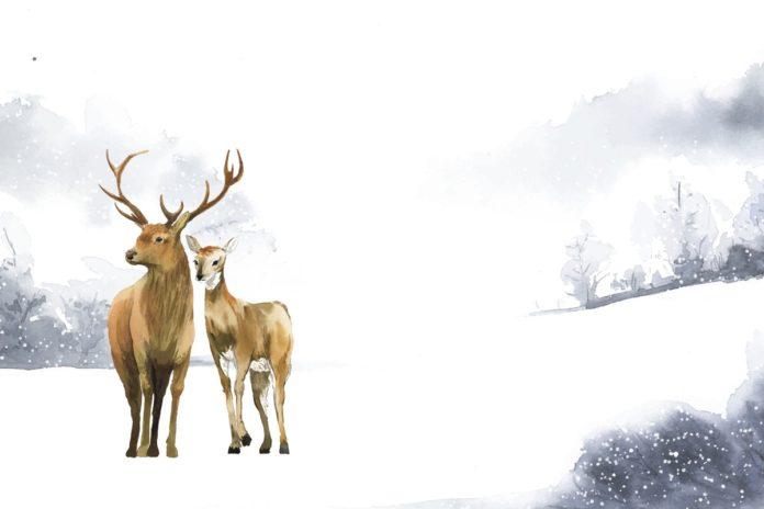 Vorlesegeschichte für Kinder: Schnee im Winter