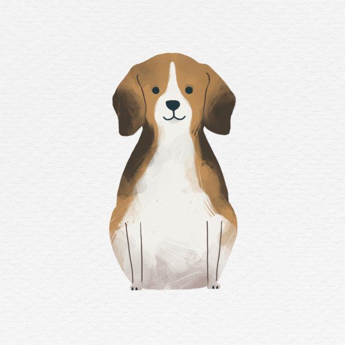 Max, dein neuer Hund