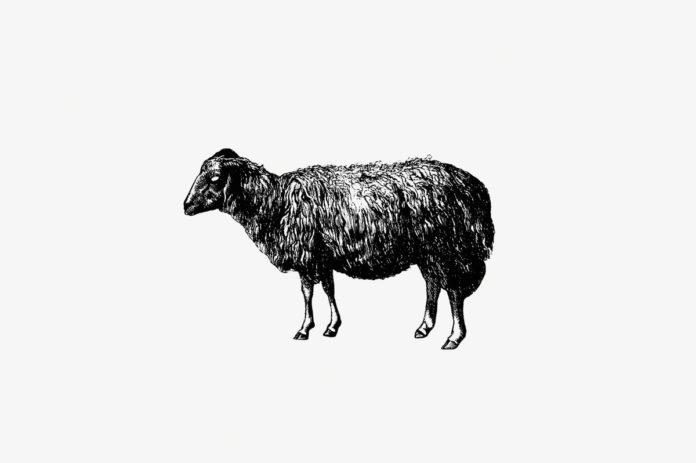 Fabel: Das schwarze Schaf