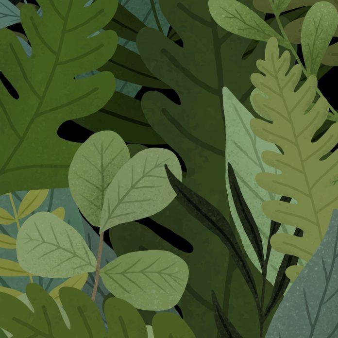 Wald-Schnitzeljagd für Kinder